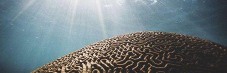 Вода и мозг. Как улучшить память?
