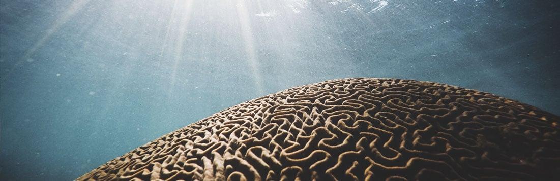 вода и мозг